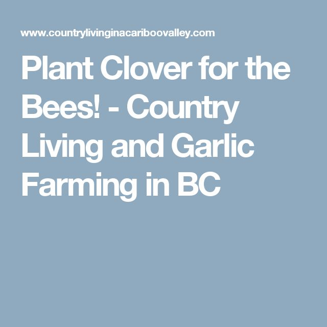 Plant Clover for the Bees! - Country Living and Garlic Farming in BC