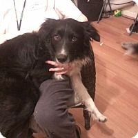 Border Collie Mix Dog for adoption in Acworth, Georgia - Blackie