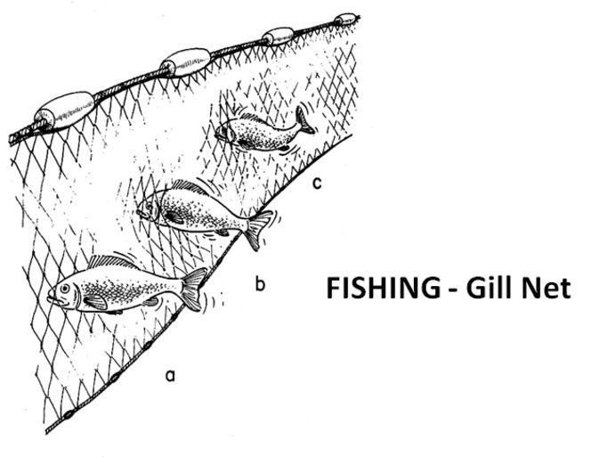 26 best gill net fishing with gill net images on for Gill net fishing