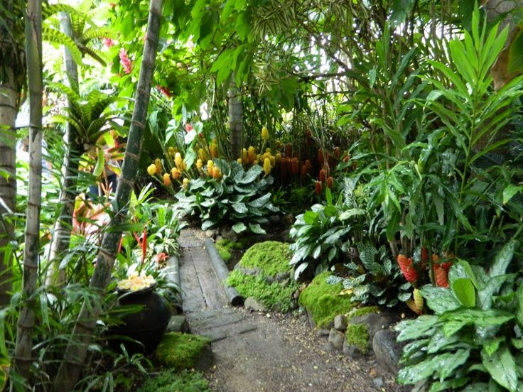 The 25 best ideas about tropical garden design on for Garden designs queensland