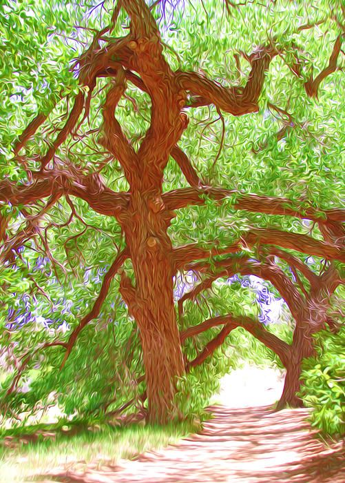 17 best cottonwood trees images on pinterest stems carving and noneuse coupon code gyknnn at checkout for a special discount fandeluxe Choice Image