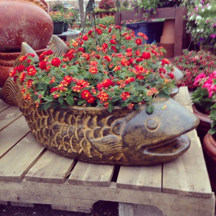 Large Ceramic Fish Flower Pot With A Lantana Plant At Our