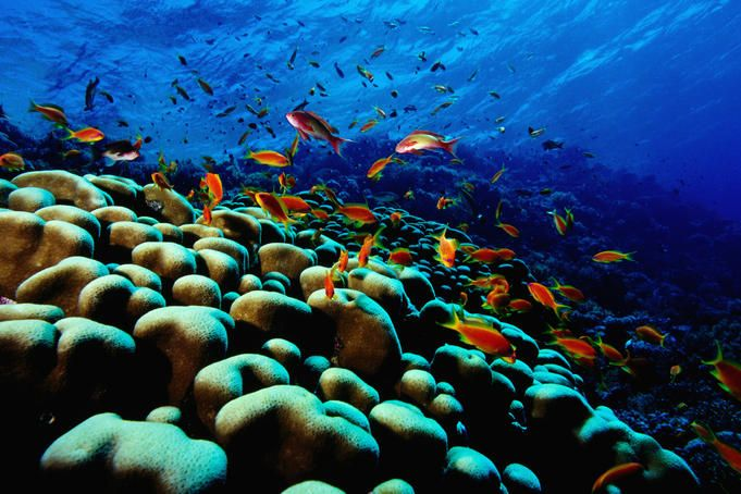 Mozambique for the snorkling...maybe?