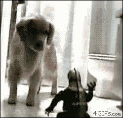 Cutest Dog GIF Ever!