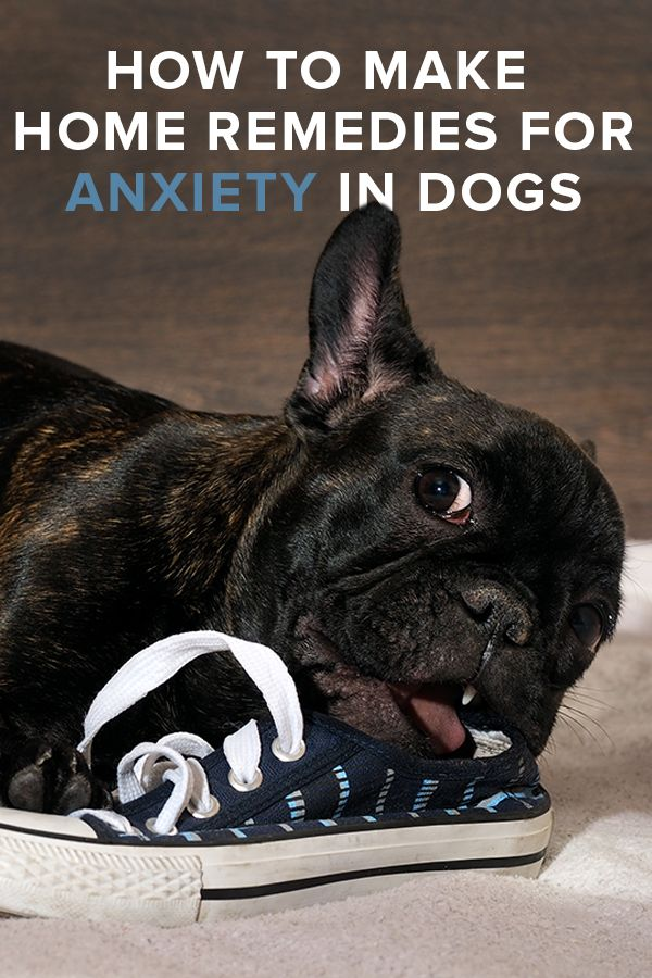 How to Make Home Remedies for Anxiety in Dogs
