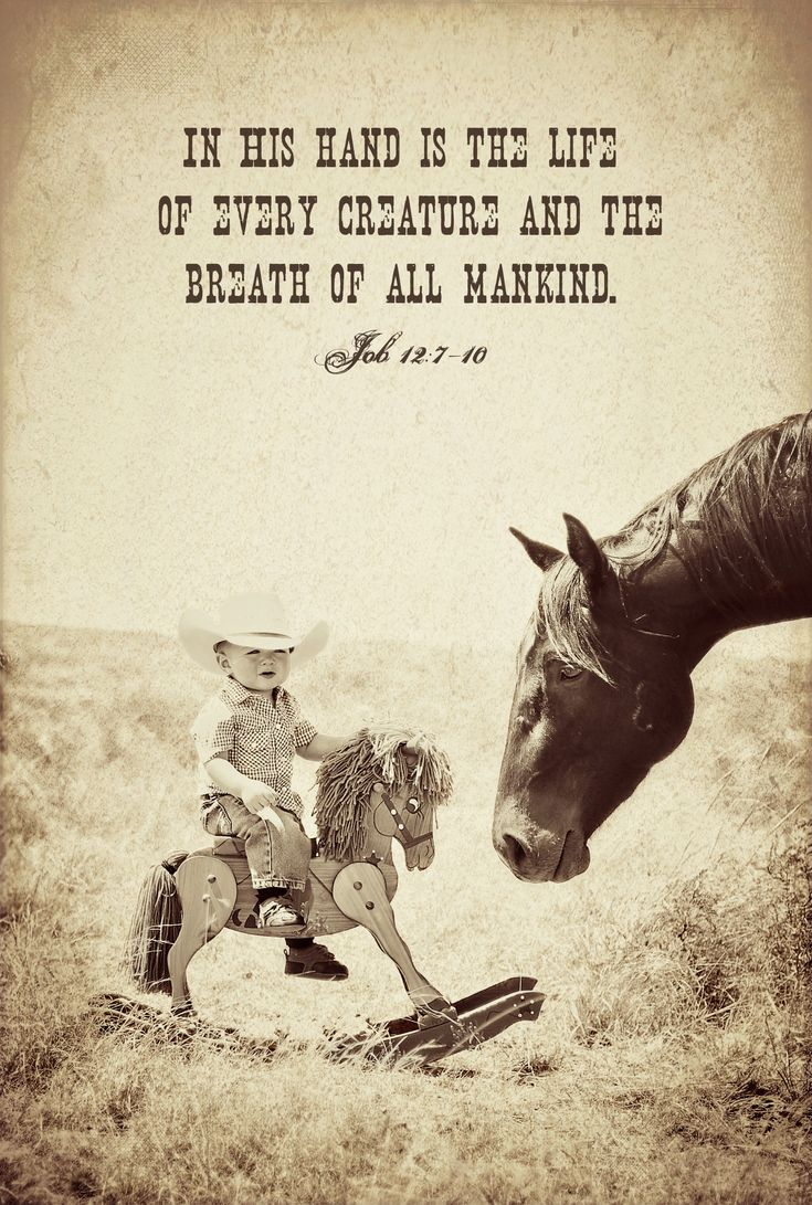 God bless gentle ponies. #photography #horses #children #cowboysLil Cowboy, God, Rocks Hors, Quotes, Country Boys, Hands, Cowboy Room, Children Photography, Little Boys