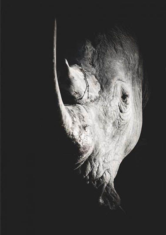 Rhino Wim van den Hever