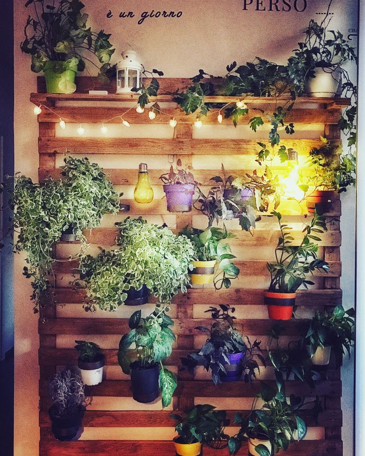 #verdeverticale il mio #angoloverde #pianteefiori #homesweethome #riciclocreativo #palletprojects #palletideas #palletwall #palletdecor #palletprojects #verdeincittà #workinprogress by #pavisistem #night #nightromance