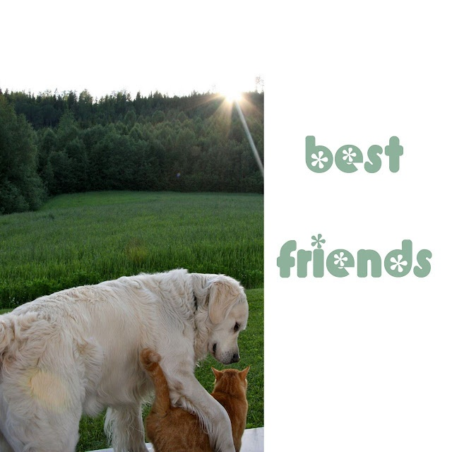 Best friends Gordon the dog and Daisy the cat