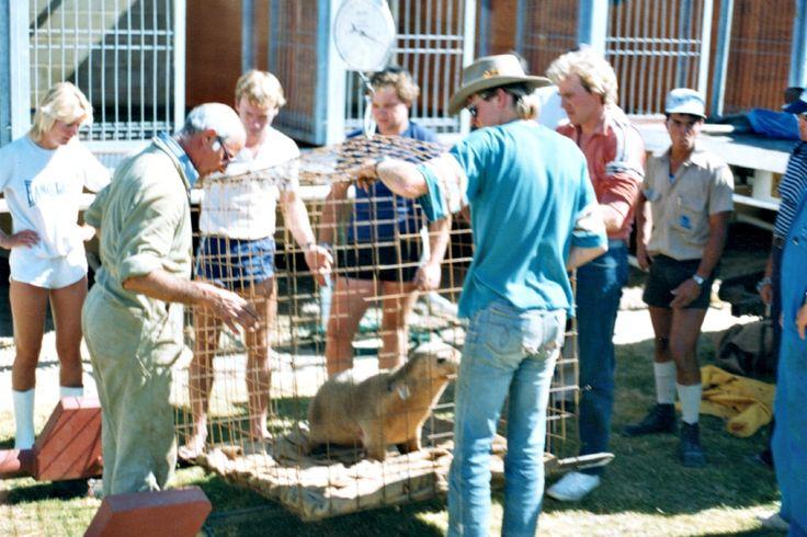 New sea lions arrive 1986