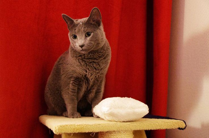 Poupie et son coussin à la valériane (dit aussi coussin qui pu) Magnifique photo, superbe modèle :-)