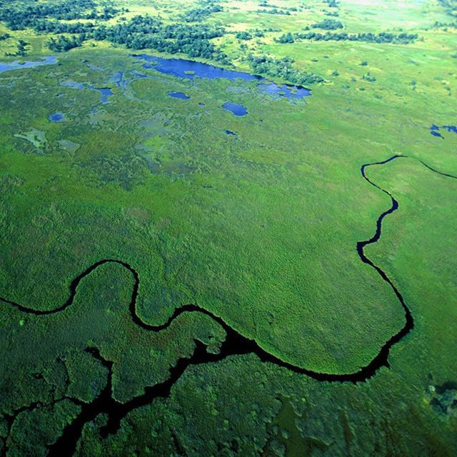 #Botswana the okavango delta  This photo is part of #EpicoITSaGreenWorld our work devoted to the beauty of Nature. Click on the hashtag to see other photos from this serie.  Do you like our photos? Help us to growth: follow us!  #stories #travel #tourism #travelling #traveling #travelgram #traveler #travelphotography #travels #traveltheworld #travelphoto #traveldiaries #travelingram #travelpics #tour #tourist #tourists #tourlife #vsco #vscocam #vsco_lovers #vscophile #vscogood #nature #green…