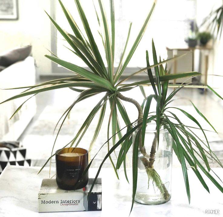 ROOMER Blog - Greenery