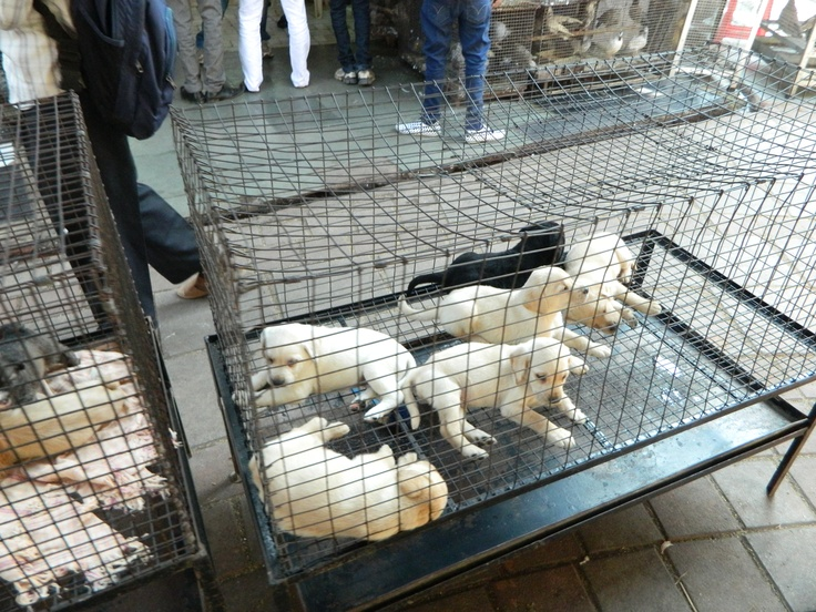 Sell puppies