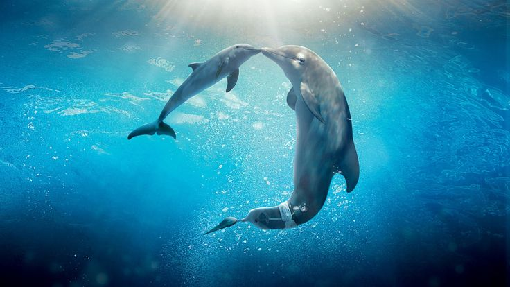 3840x2160 dolphin 4k cool desktop wallpaper