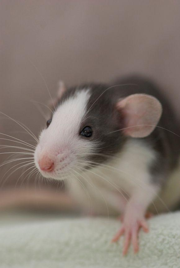 1257 best Cutest Animals images on Pinterest | Cute ... | 580 x 865 jpeg 29kB