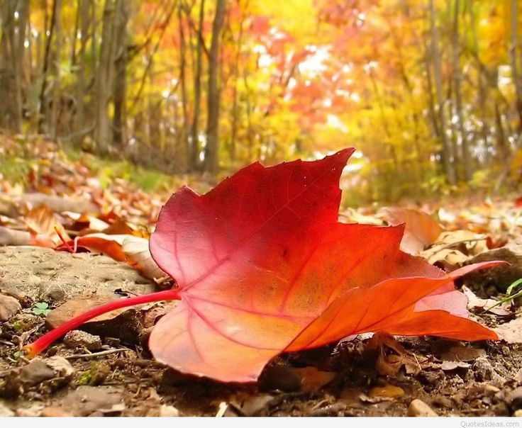 Collection of Autumn Backgrounds on HDWallpapers 1920×1080 Autumn Wallpapers Download (37 Wallpapers) | Adorable Wallpapers