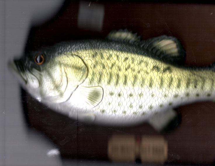 Big Mouth Billy Bass Singing Fish Motion Activated 1999 Wall Plaque Gemmy USA Summer Sale Free Sgipping by XYZCOLLECTABLES on Etsy