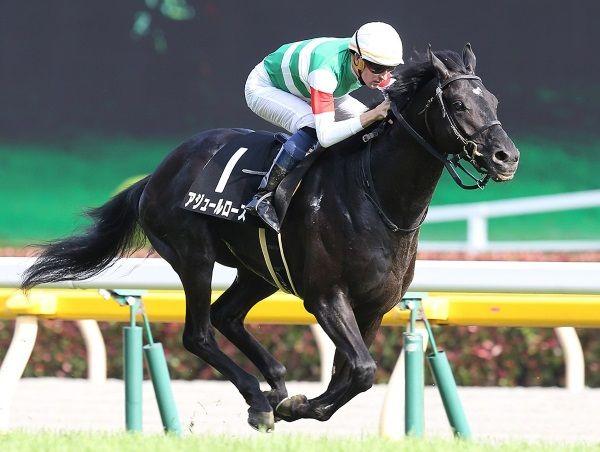 競馬の祭典で狙い撃つのは超伏兵となるこの馬だ! - netkeiba.com