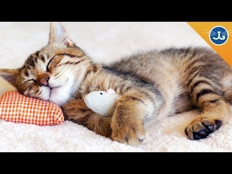 Come riuscire a dormire di notte con un gatto in casa