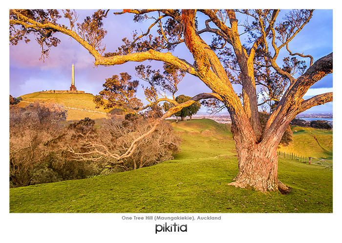 Maungakiekie or One Tree Hill in Auckland. This popular site in Auckland provided the name for the U2 Song, which was was written to pay tribute to Greg Carroll who was an New Zealand employee of the band. This song in turn was the inspiration for the name of the US teen drama, One Tree Hill.   And now this world famous site has a place in our range of postcards!
