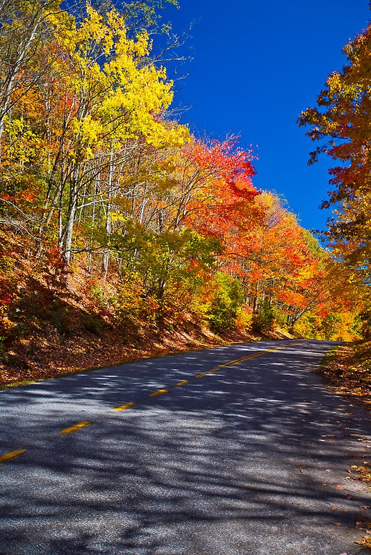 Fall Colors Along the Blue Ridge Highway, Tennesee, by PhotosbyFloodBlue Ridge Mountains, America Beautiful, Fall Colors, Ridge Highway, Fall Autumn, Blue Ridge Parkway, Beautiful States, Photography, Photosbyflood Wat