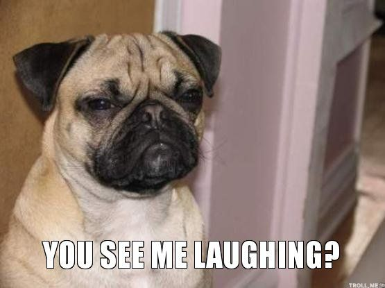 YOU SEE ME LAUGHING? | Pugs | Pinterest | Pug and Laughing