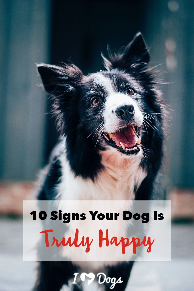 10 Signs Your Dog Is Truly Happy Brain Games For Dogs Dog Toys