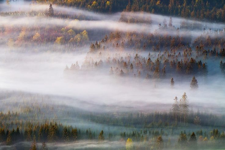 In moody forest by Marcin Sobas on 500px