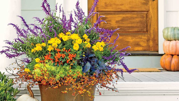 Bring a seasonal splash of color to your entryway by mixing and matching eye-popping blooms with rustic grasses and foliage in your fall container gardens. Container gardens are a great way to enjoy seasonal splashes of color. For fall container gardening, mix eye-popping blooms with rustic grasses and foliage. Here, the Southern Living gardening editors share bright ideas for bringing the shades and tones of autumn to your home. From decorative mums and pumpkins—you can even combine the two…