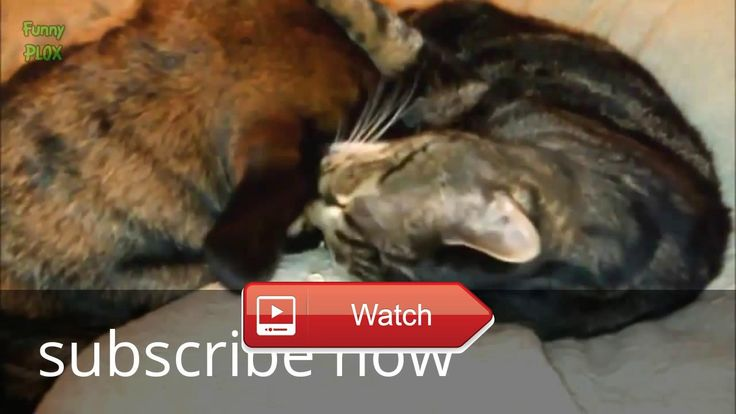 😸 top funny cats videos funny videos try to not laughtfunny cats fail funny cats 😼 top funny cats videos funny videos try to not…
