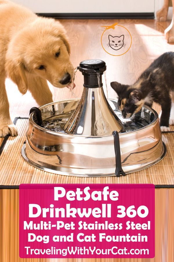 Water Fountain For Cats Petsafe Drinkwell 360 Cat Water Fountain Water Fountain Fountain