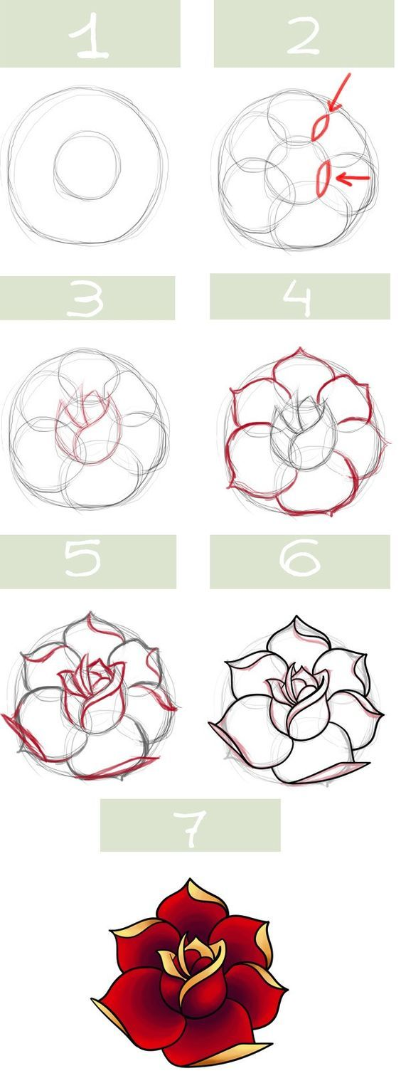 Traditional Rose Drawing Stepbystep Instruction Chart: