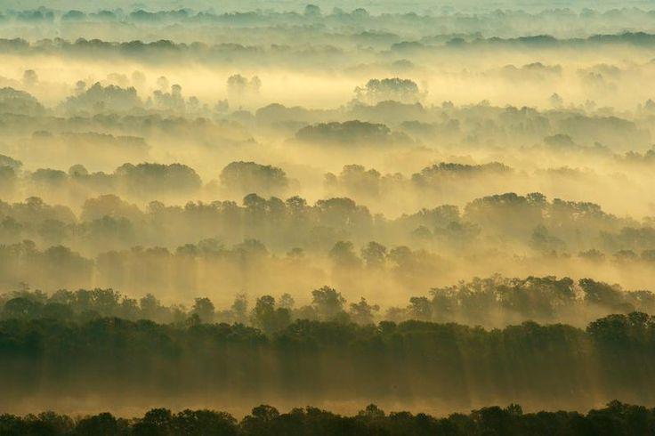 Rewilding Europe: Making Europe a Wilder Place