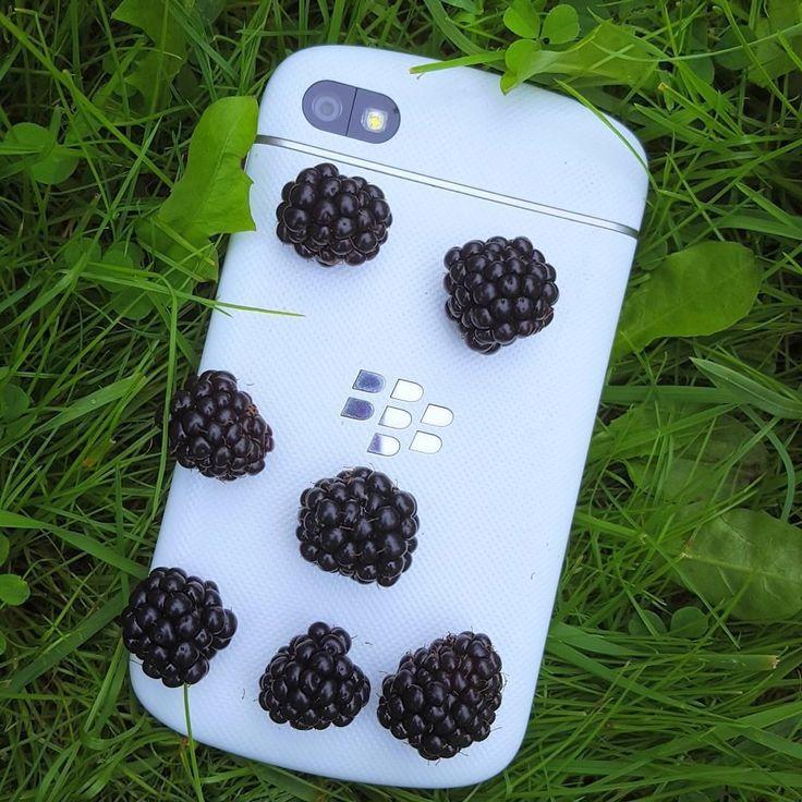#inst10 #ReGram @kamolnikoff: #ежевика #blackberry #myblackberry #природаитехнологии #лето #BlackBerryClubs #BlackBerryPhotos #BBer #BlackBerryQ10 #Q10 #QWERTY #Keyboard #BlackBerry10 #BlackBerryCases #Skin