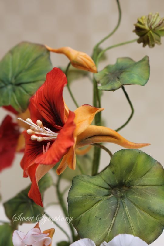 {Real lovely Nasturtiums by SweetSymphony}