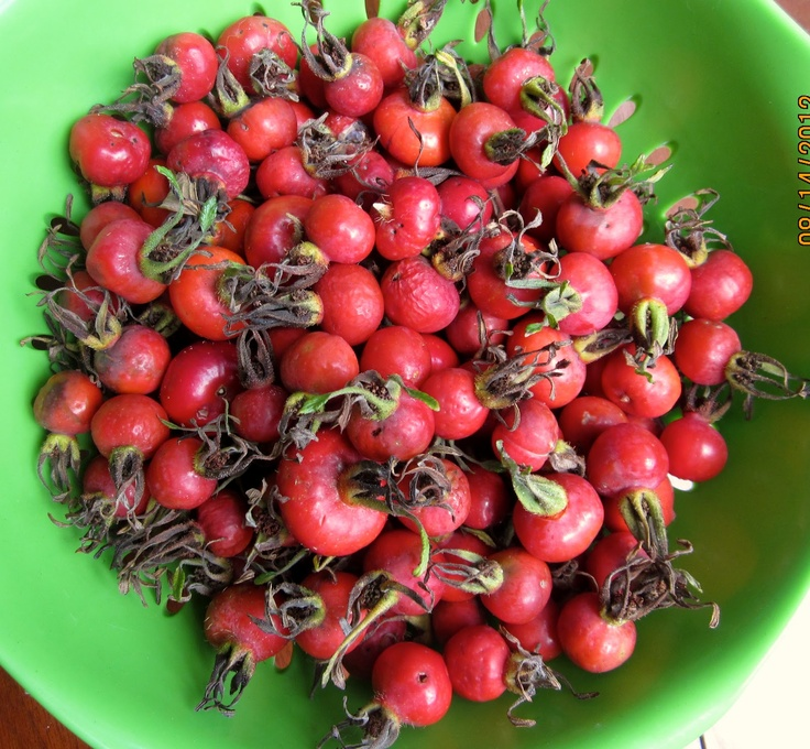 rose hip jam with red wine amp apples rose recommendations rosa canina ...