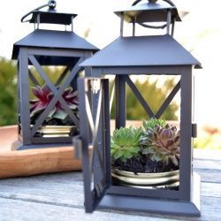 Plant something this Earth Day by turning an old lantern into a sweet succulent planter. It's green and easy, too!