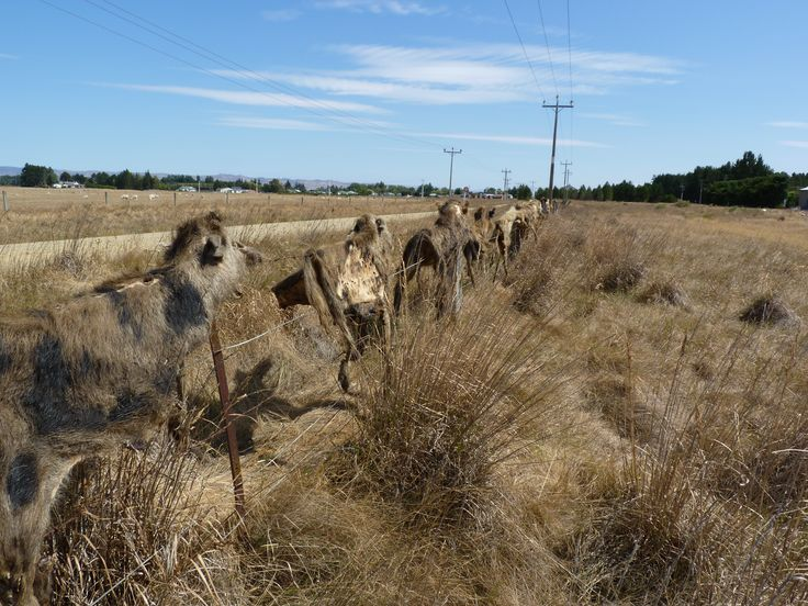 Departing Wedderburn Cottages saw us head into our longest day on the trail, with a ride of 48km to Hyde. We were feeling pretty good in the knowledge that for the next two days our path should lea...