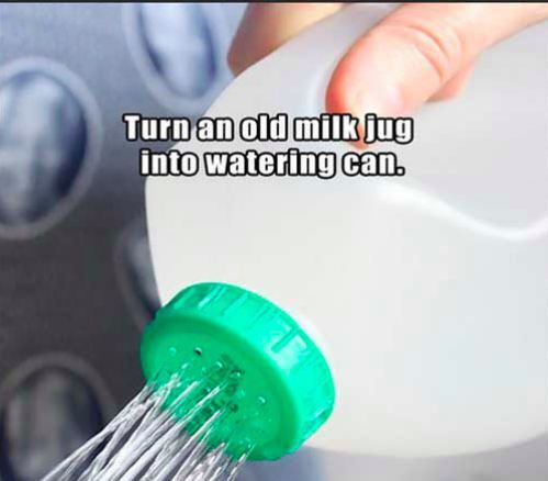 Milk Jug watering can