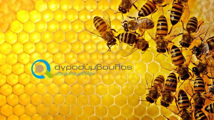 Μελισσοκομία | Bees