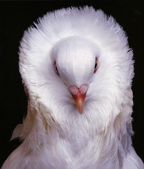Mejores 71 imágenes de birds en Pinterest | Pájaros bonitos, Aves ...