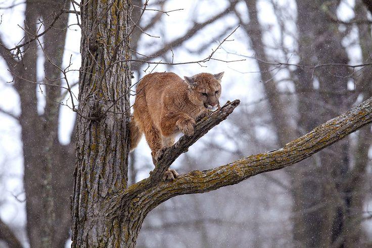 North American Wildlife Jim Zuckerman Photography