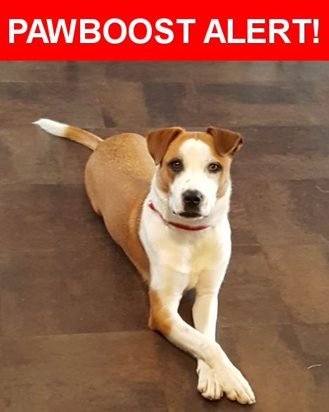 Please spread the word! Dozer was last seen in Lithia Springs, GA 30122.    Nearest Address: Clare Ln, Old Beulah Rd