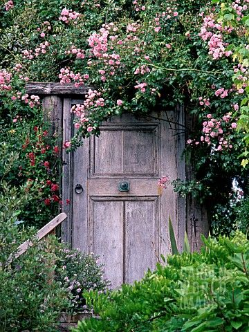 A_SHED_IN_THE_CONSERVATORY_GARDEN_AT_WYTHERSTONE_HOUSE__