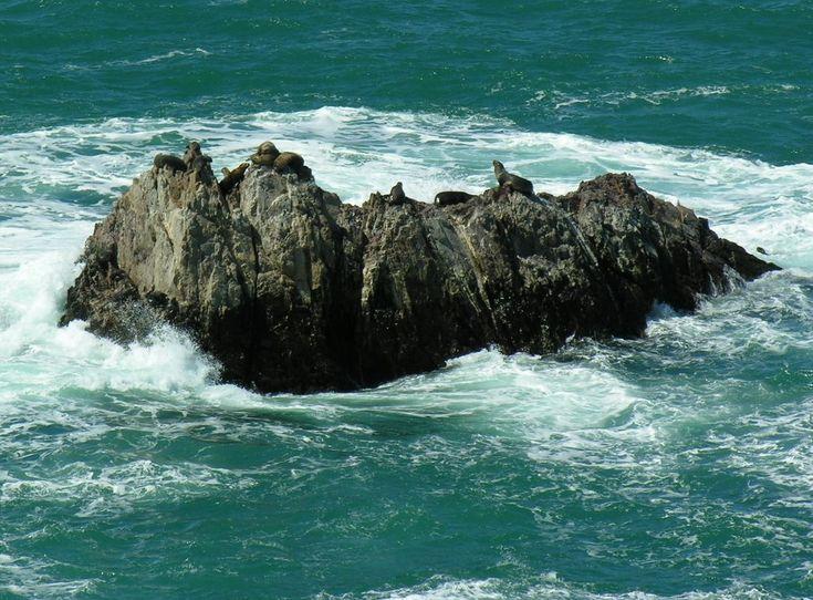 Lobos Cabo Blanco
