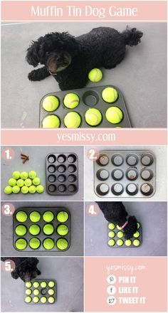 Dog games are a great way to keep your pet stimulated and to practice using their senses. This muffin tin dog treat game is a fun and entertaining activity to play with your dog.