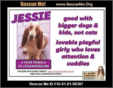 ― South Africa Dog Rescue ― ADOPTIONS ― RescueMe.Org