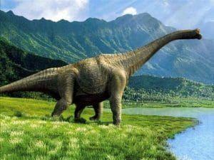 Le dinosaure Apatosaurus, qui est en fait le bon nom du Brontosaure.