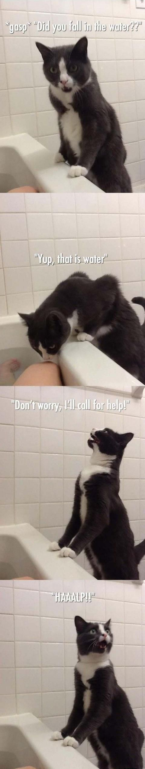 bathe a cat, cat overly dramatic expressions